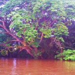 Many different types of trees line the river.