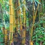 Bamboo is one of the fastest growing plants in the world; growing up to a foot in one day