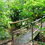 Bamboo is an important building material for things like bridges