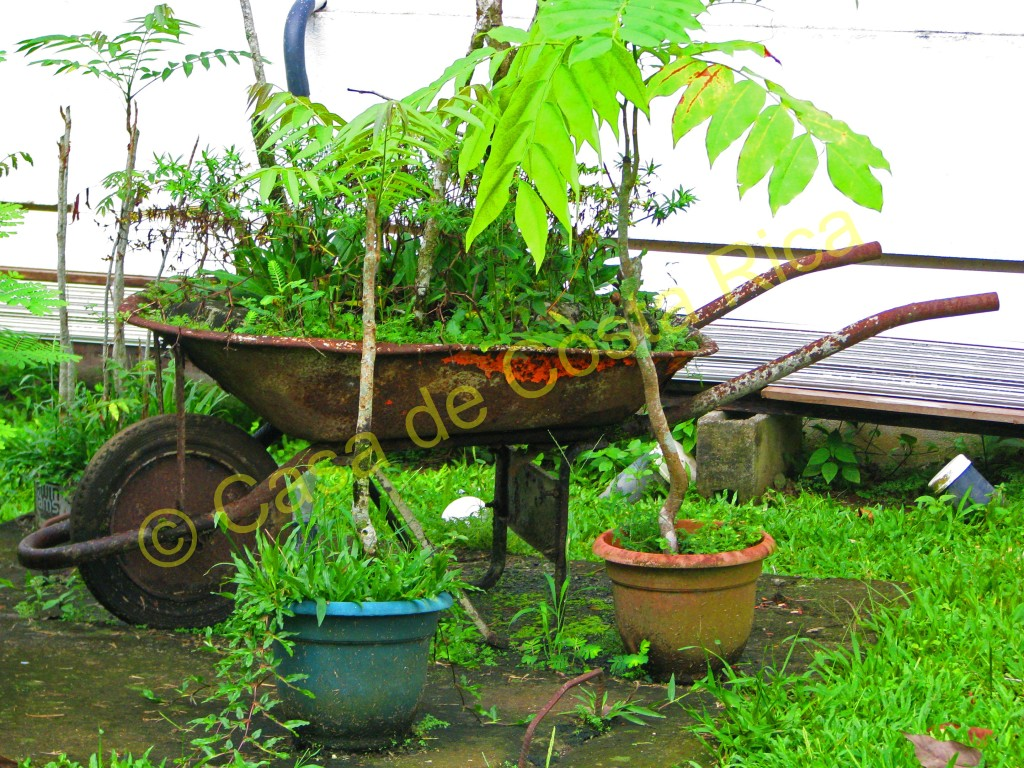 Plant arrangement in the yard