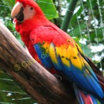 This is the majestic scarlet macaw
