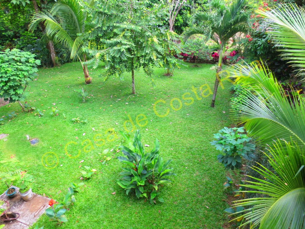Very tranquil, secluded back yard full of iguanas, humming birds, exotic fruit trees and flowers!