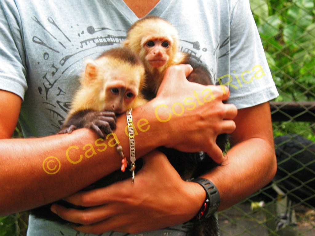 Baby male monkeys are often abandoned by their troop