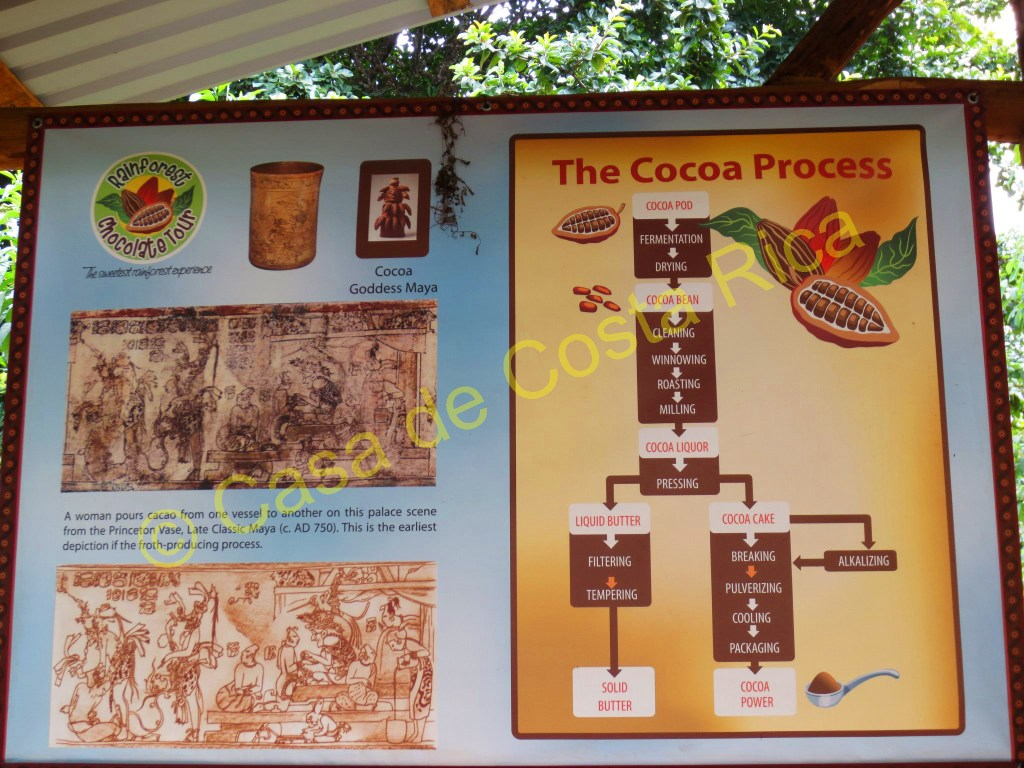 Visual diagram for how cacao gets turned into chocolate