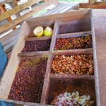 Fermenting is a 7 day process; one box for each day