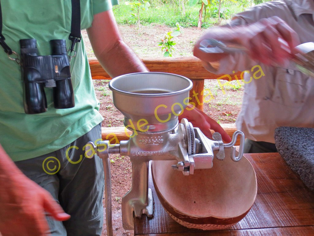 Once the shells are removed the beans are put through a grinder with sugar to sweeten the taste