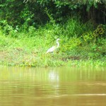 Another egret.
