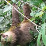 Sloth!