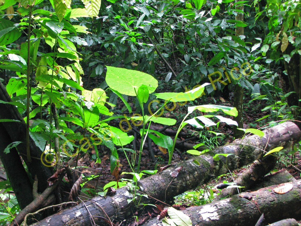 There are many medicinal plants found in the forest.