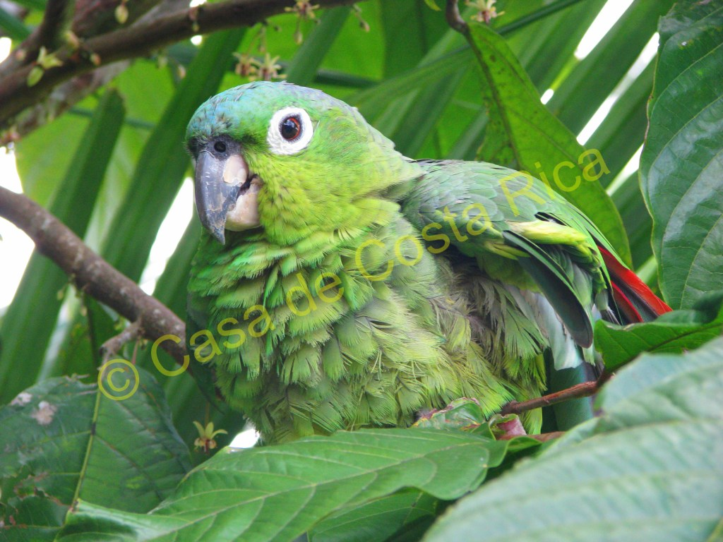 Parrots are crucial for the dispersement of seeds