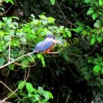 bird in cano negro boat tour