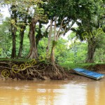 river of cano negro boat tour