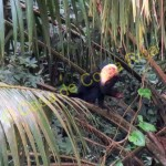 animal in cano negro boat tour