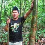 The gumbo-limbo tree.