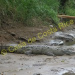 Don't get too close to the crocodiles ;-)
