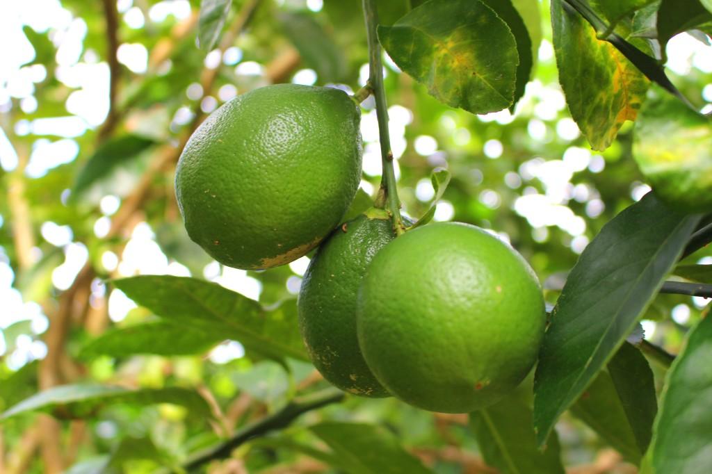 Fresh limes!