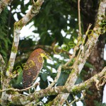 Rare tiger heron just outside the front door. Great bird watching in the morning.