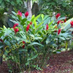 plants in Secluded Tropical Retreat